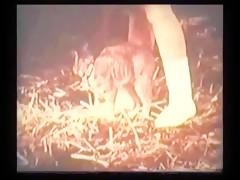 Lenceria golosa
