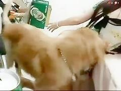 I need sex with dog